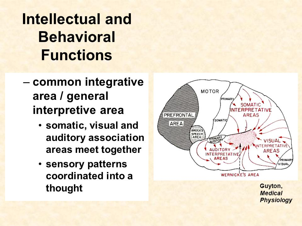 Intellectual And Behavioral Functions Cerebral Cortex Frontal Lobe