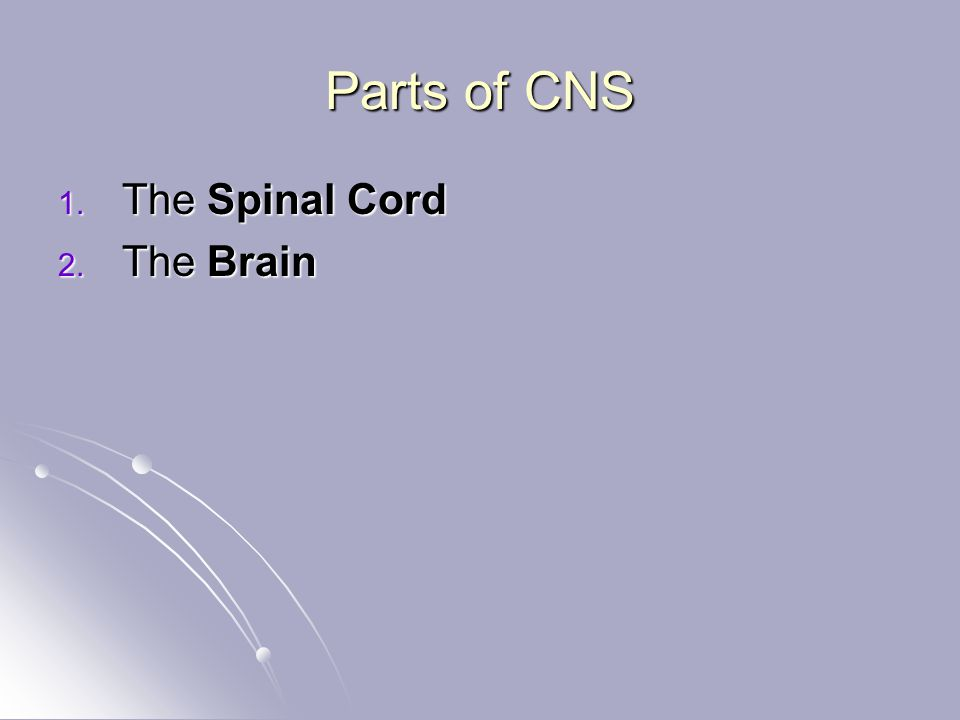 Parts of CNS 1. The Spinal Cord 2. The Brain