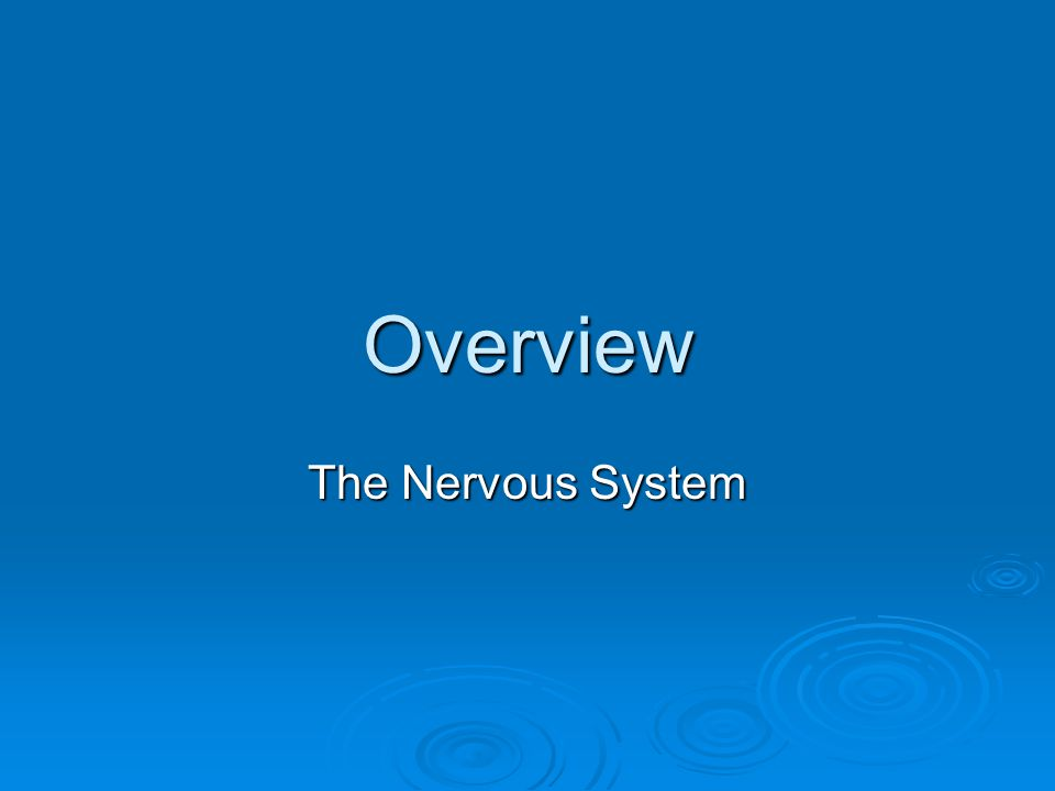 Overview The Nervous System