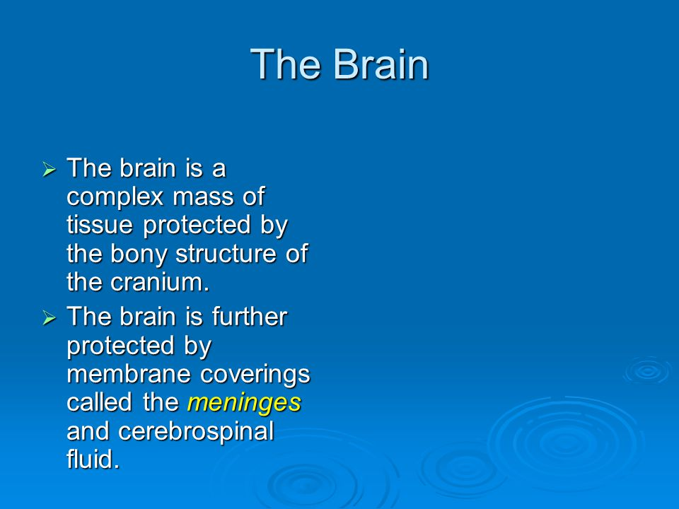 The Brain  The brain is a complex mass of tissue protected by the bony structure of the cranium.