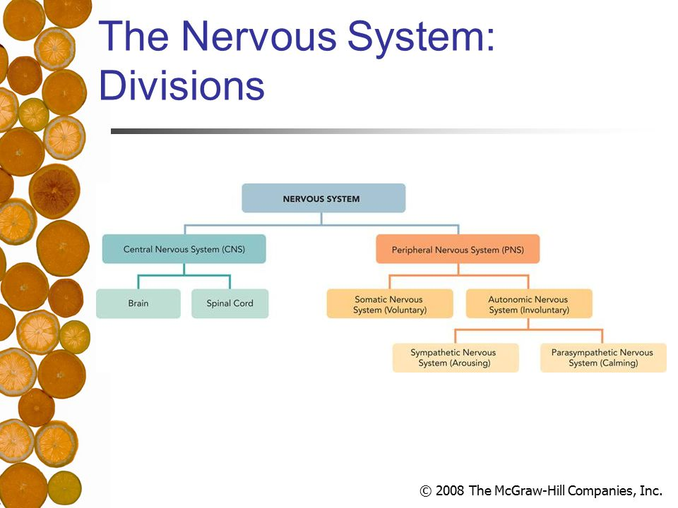 © 2008 The McGraw-Hill Companies, Inc. The Nervous System: Divisions