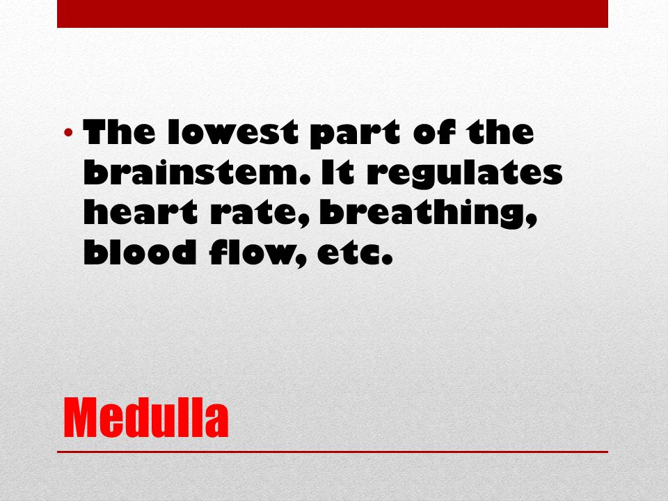 Medulla The lowest part of the brainstem. It regulates heart rate, breathing, blood flow, etc.