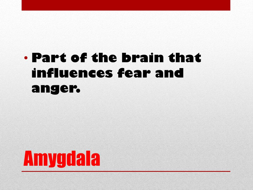 Amygdala Part of the brain that influences fear and anger.