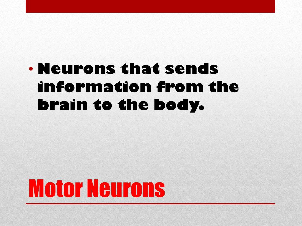 Motor Neurons Neurons that sends information from the brain to the body.