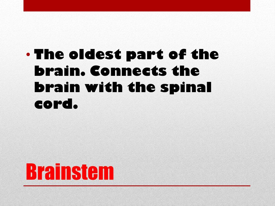 Brainstem The oldest part of the brain. Connects the brain with the spinal cord.