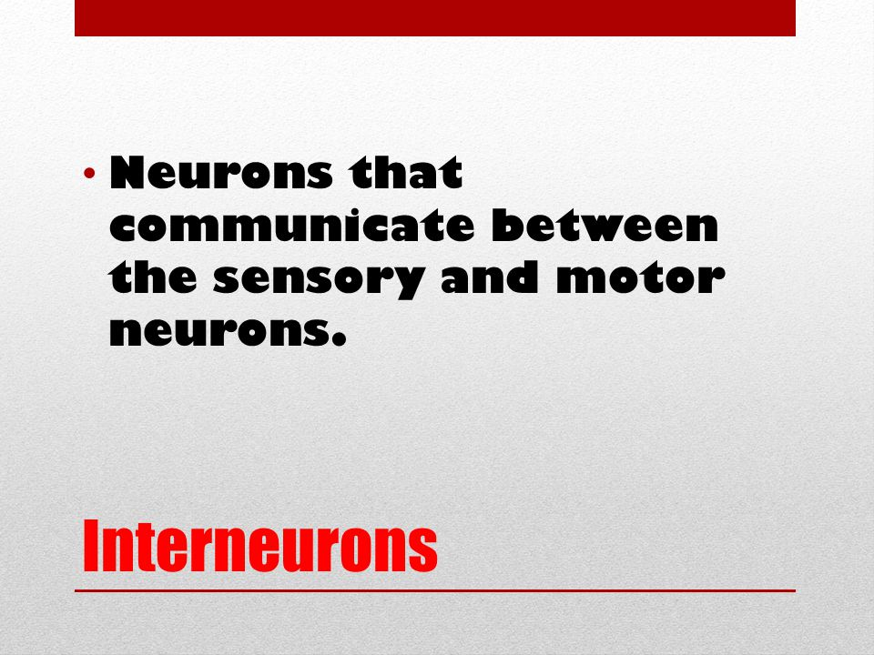 Interneurons Neurons that communicate between the sensory and motor neurons.