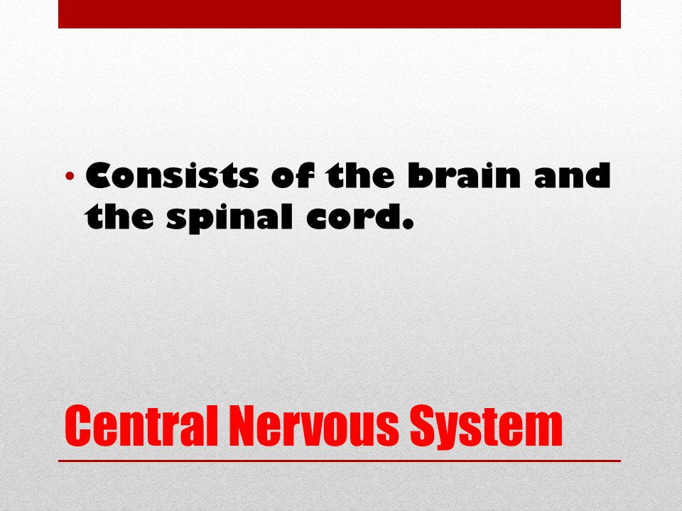 Central Nervous System Consists of the brain and the spinal cord.