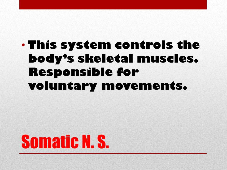 Somatic N. S. This system controls the body's skeletal muscles.