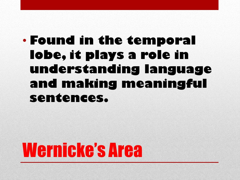 Wernicke's Area Found in the temporal lobe, it plays a role in understanding language and making meaningful sentences.