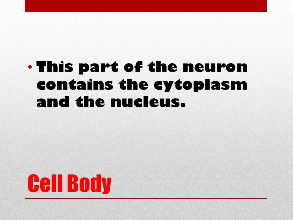Cell Body This part of the neuron contains the cytoplasm and the nucleus.