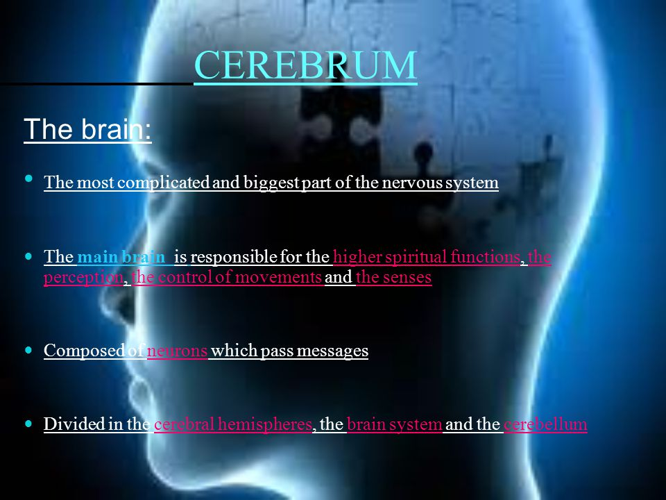 CEREBRUM The brain: The most complicated and biggest part of the nervous system The main brain is responsible for the higher spiritual functions, the perception, the control of movements and the senses Composed of neurons which pass messages Divided in the cerebral hemispheres, the brain system and the cerebellum