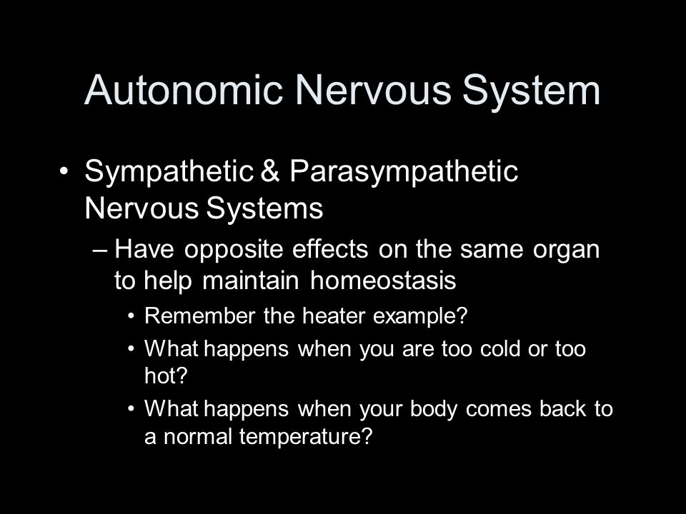 Autonomic Nervous System Sympathetic & Parasympathetic Nervous Systems –Have opposite effects on the same organ to help maintain homeostasis Remember the heater example.