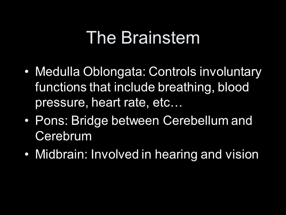 The Brainstem Medulla Oblongata: Controls involuntary functions that include breathing, blood pressure, heart rate, etc… Pons: Bridge between Cerebellum and Cerebrum Midbrain: Involved in hearing and vision