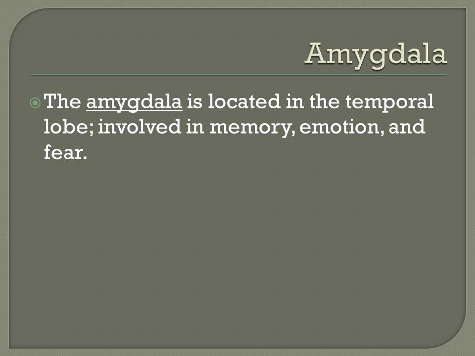  The amygdala is located in the temporal lobe; involved in memory, emotion, and fear.