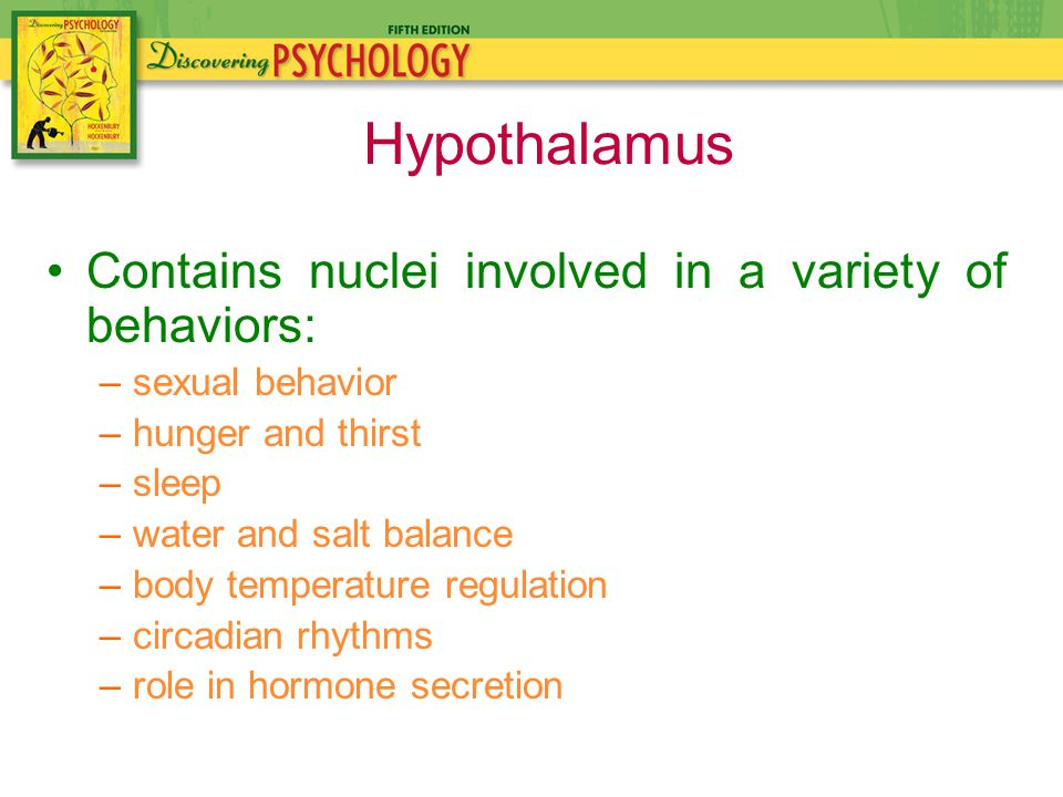 Contains nuclei involved in a variety of behaviors: –sexual behavior –hunger and thirst –sleep –water and salt balance –body temperature regulation –circadian rhythms –role in hormone secretion Hypothalamus