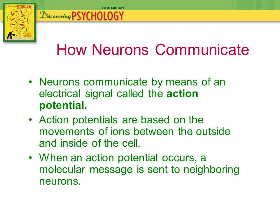 Neurons communicate by means of an electrical signal called the action potential.