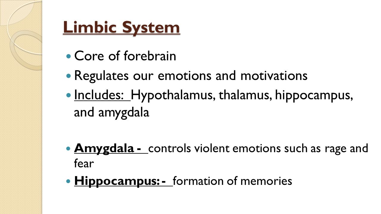 Limbic System Core of forebrain Regulates our emotions and motivations Includes: Hypothalamus, thalamus, hippocampus, and amygdala Amygdala - controls violent emotions such as rage and fear Hippocampus: - formation of memories