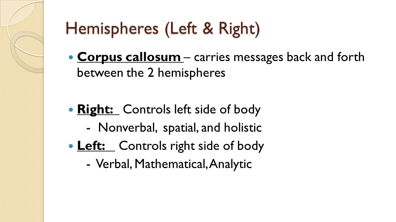 Hemispheres (Left & Right) Corpus callosum – carries messages back and forth between the 2 hemispheres Right: Controls left side of body - Nonverbal, spatial, and holistic Left: Controls right side of body - Verbal, Mathematical, Analytic