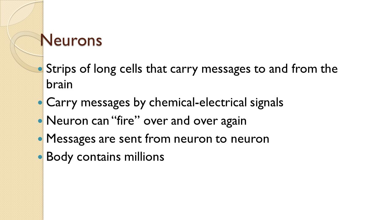 Neurons Strips of long cells that carry messages to and from the brain Carry messages by chemical-electrical signals Neuron can fire over and over again Messages are sent from neuron to neuron Body contains millions