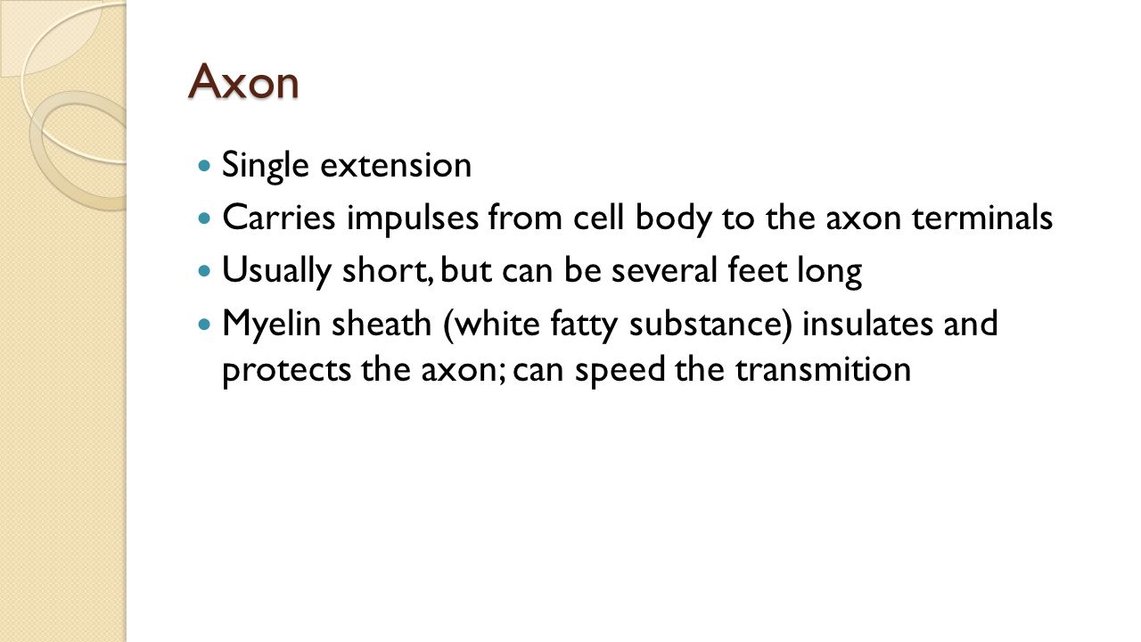 Axon Single extension Carries impulses from cell body to the axon terminals Usually short, but can be several feet long Myelin sheath (white fatty substance) insulates and protects the axon; can speed the transmition
