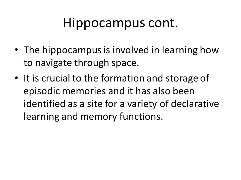 Hippocampus cont. The hippocampus is involved in learning how to navigate through space.