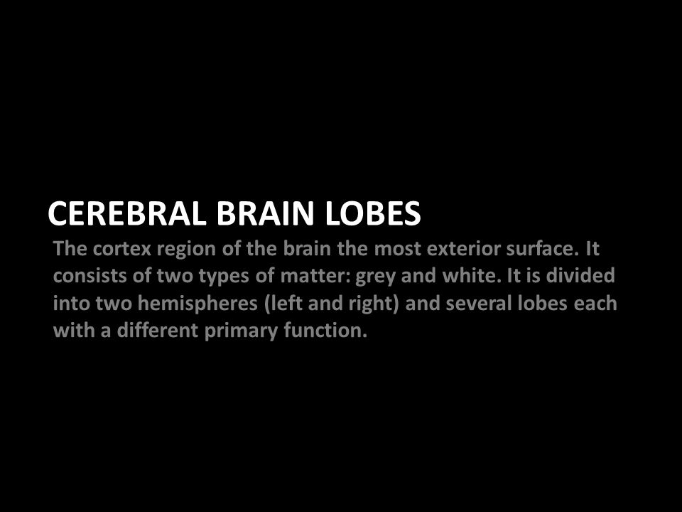 CEREBRAL BRAIN LOBES The cortex region of the brain the most exterior surface.