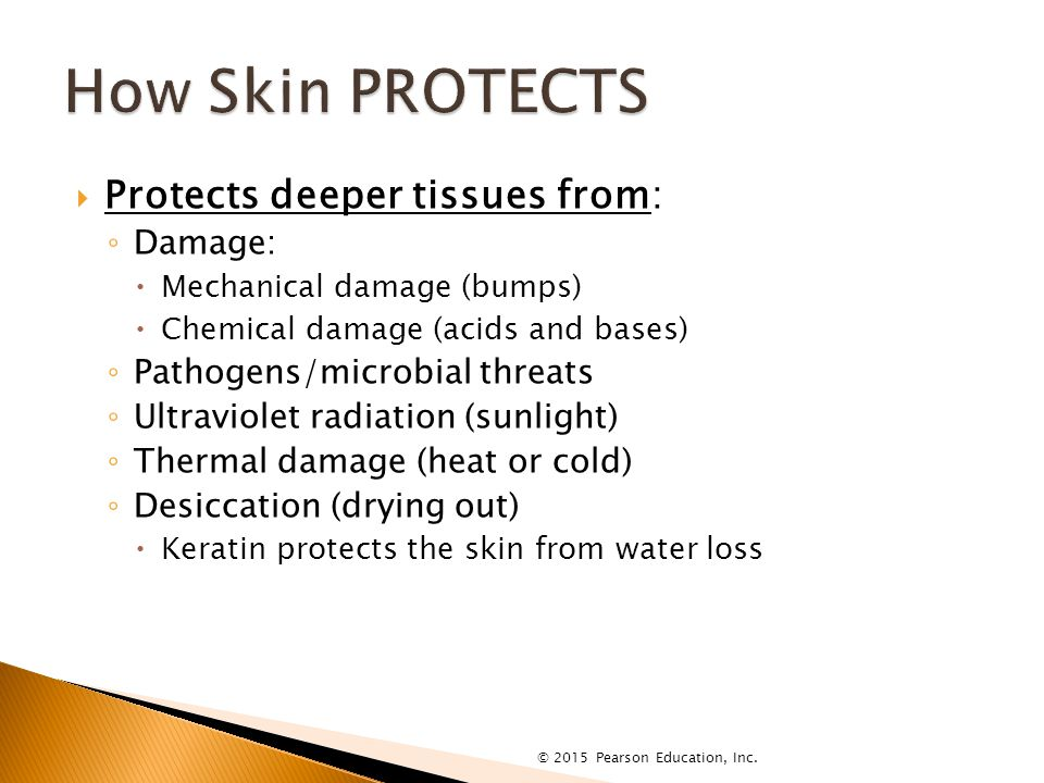  Protects deeper tissues from: ◦ Damage:  Mechanical damage (bumps)  Chemical damage (acids and bases) ◦ Pathogens/microbial threats ◦ Ultraviolet radiation (sunlight) ◦ Thermal damage (heat or cold) ◦ Desiccation (drying out)  Keratin protects the skin from water loss © 2015 Pearson Education, Inc.