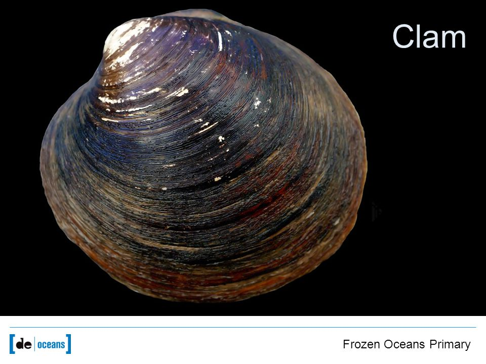Image of clams Clam Frozen Oceans Primary