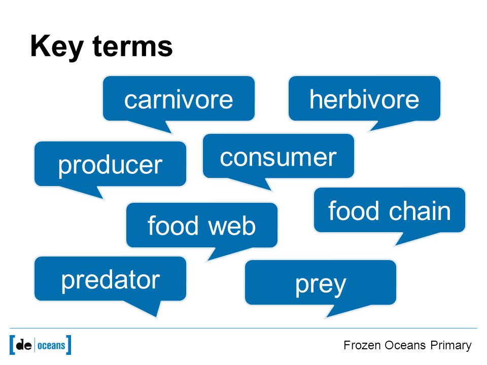 Key terms carnivore herbivore producer consumer food chain food web predator prey Frozen Oceans Primary