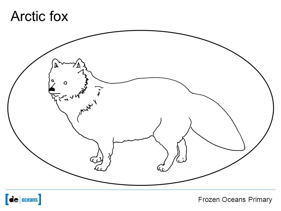 Frozen Oceans Primary Arctic fox