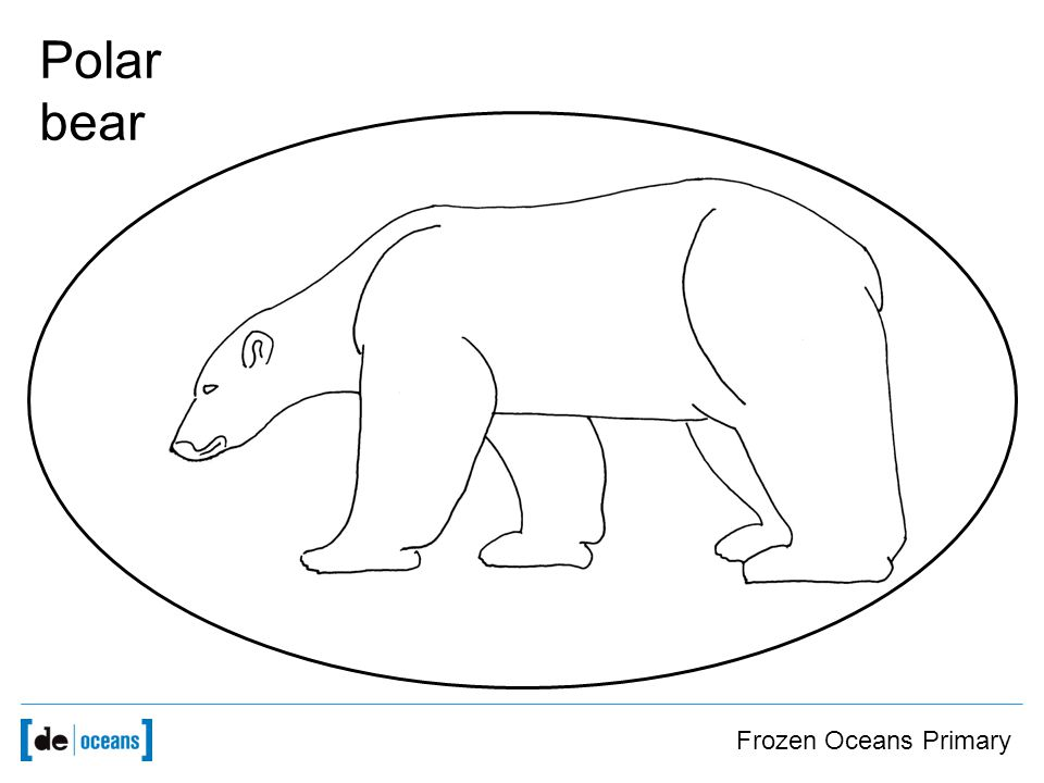 Frozen Oceans Primary Polar bear