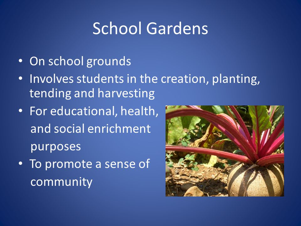 School Gardens On school grounds Involves students in the creation, planting, tending and harvesting For educational, health, and social enrichment purposes To promote a sense of community