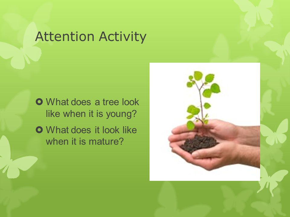 Attention Activity  What does a tree look like when it is young.