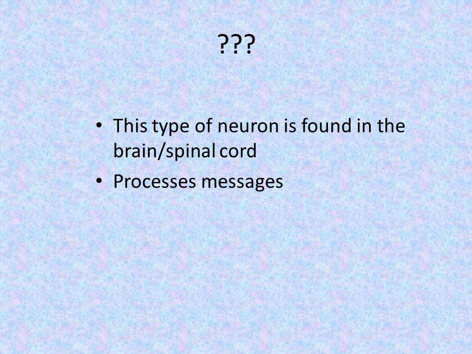 This type of neuron is found in the brain/spinal cord Processes messages