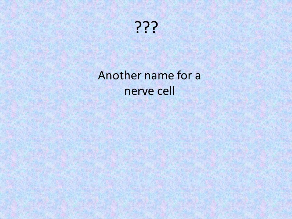 Another name for a nerve cell
