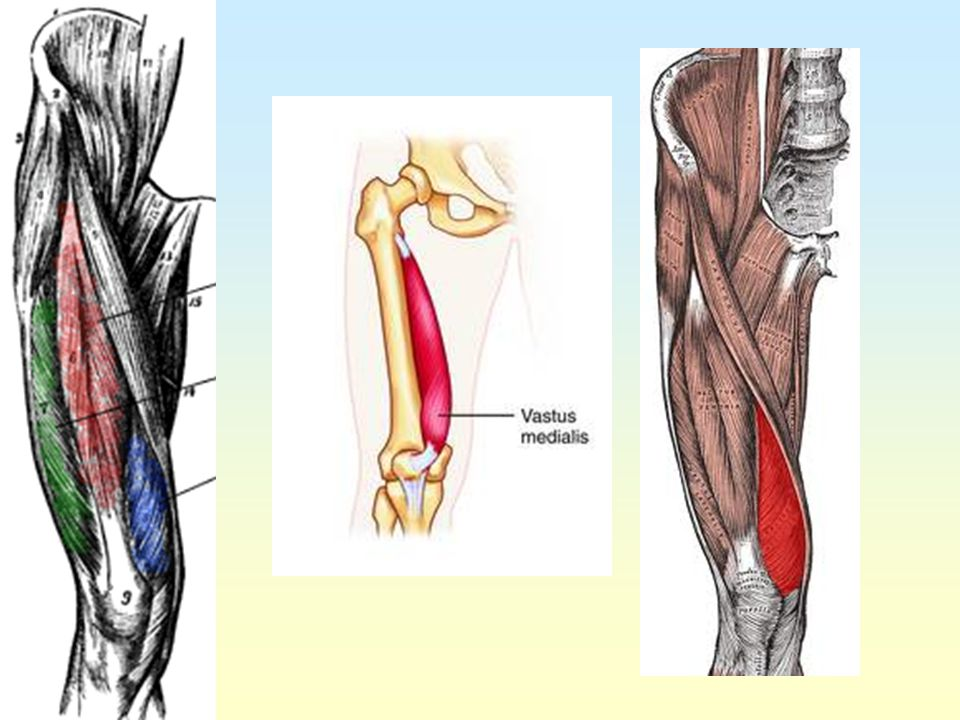 Hip Thigh And Knee Ppt Video Online Download