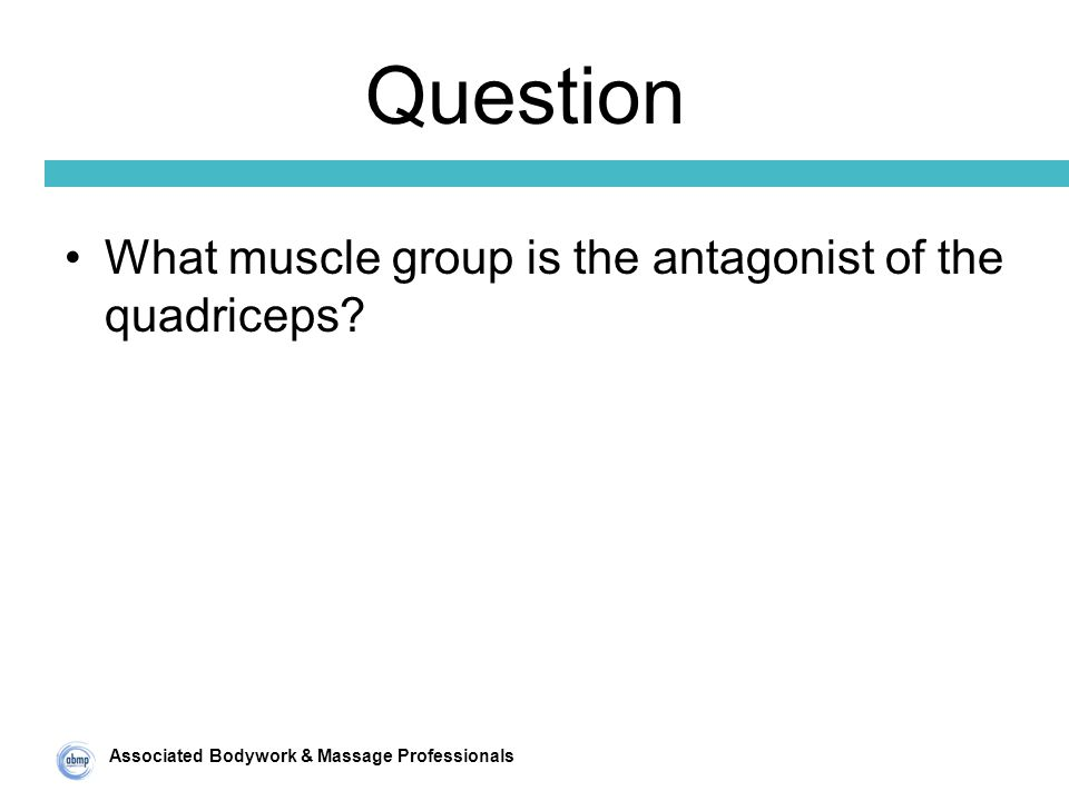 Associated Bodywork & Massage Professionals Question What muscle group is the antagonist of the quadriceps