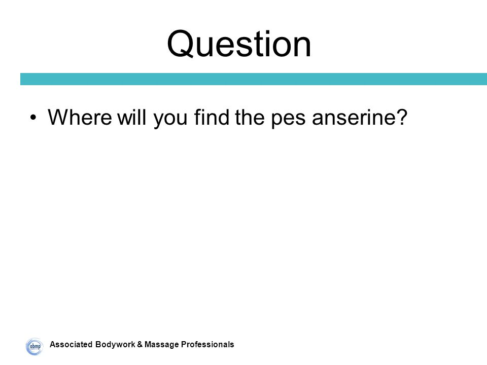 Associated Bodywork & Massage Professionals Question Where will you find the pes anserine