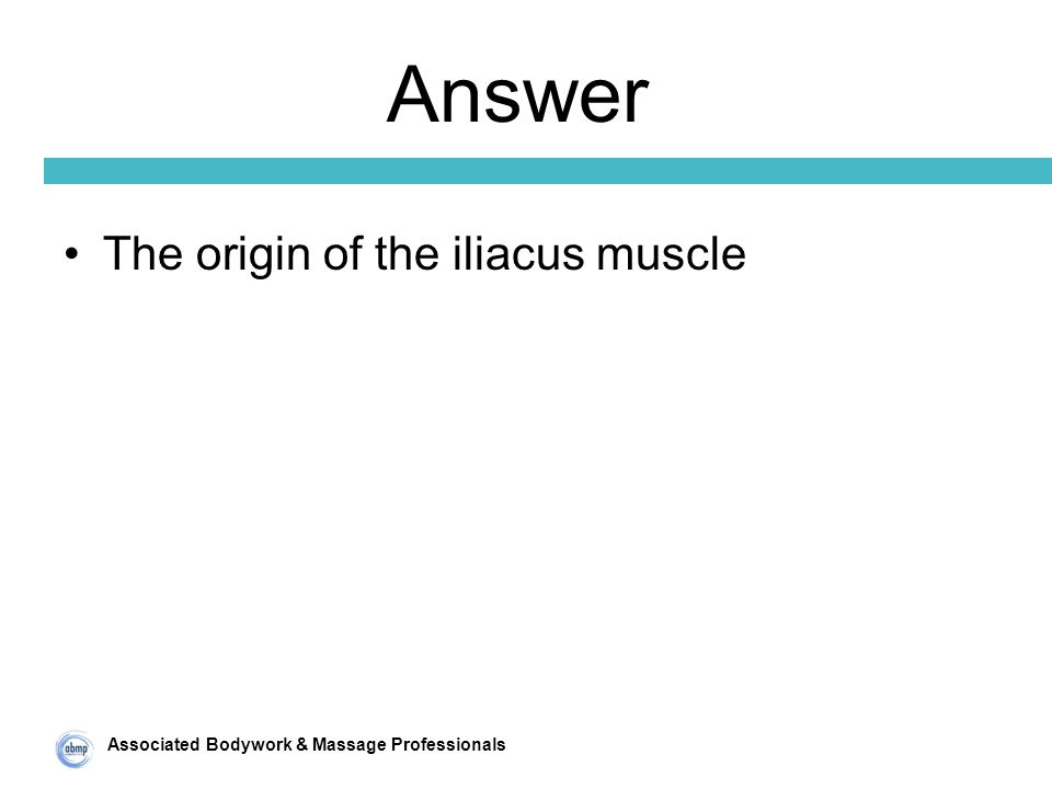 Associated Bodywork & Massage Professionals Answer The origin of the iliacus muscle