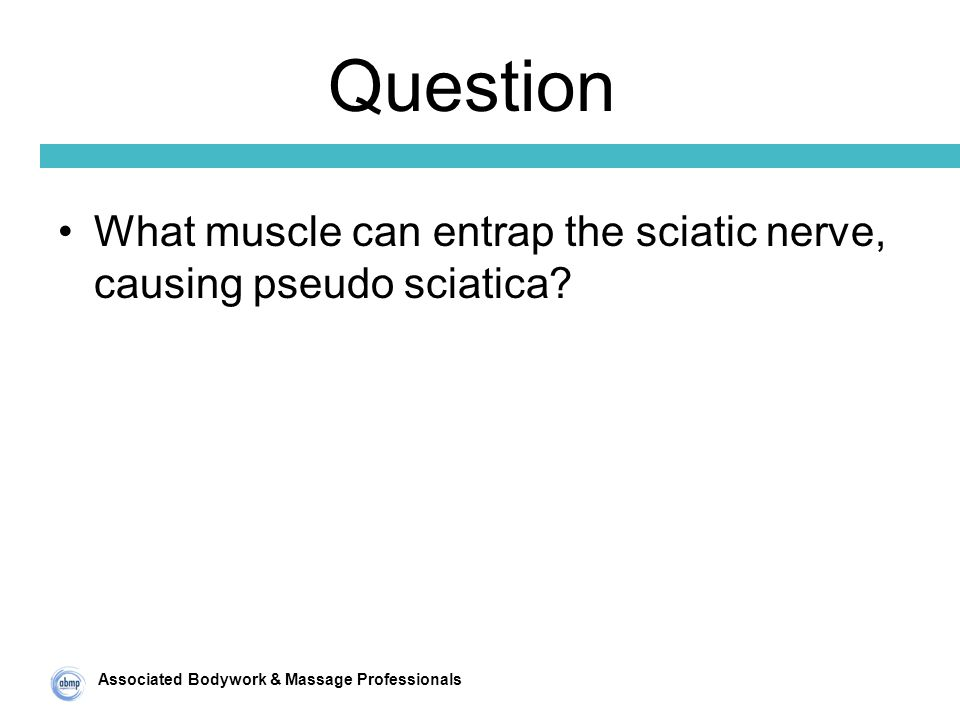 Associated Bodywork & Massage Professionals Question What muscle can entrap the sciatic nerve, causing pseudo sciatica