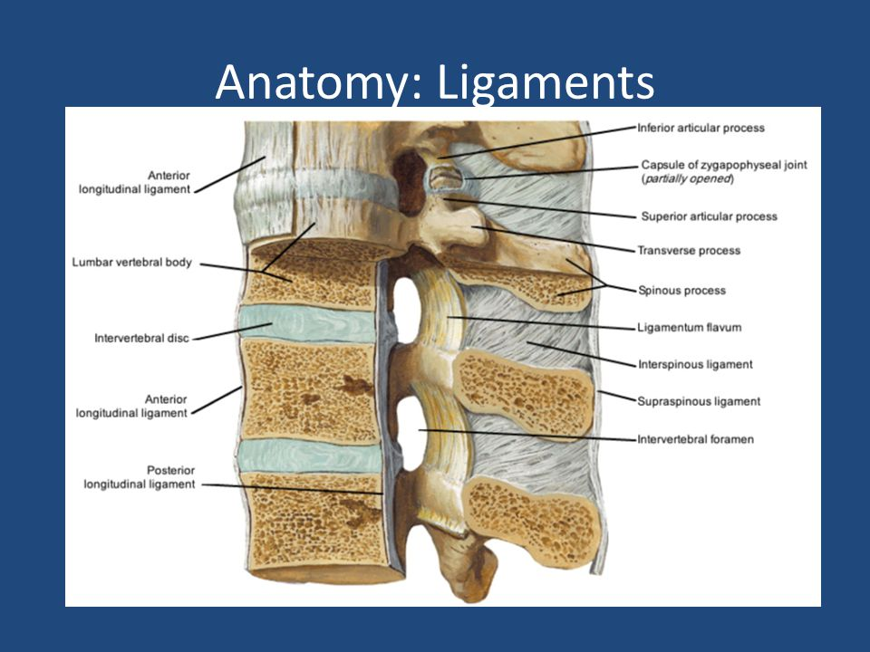 Anatomy: Ligaments