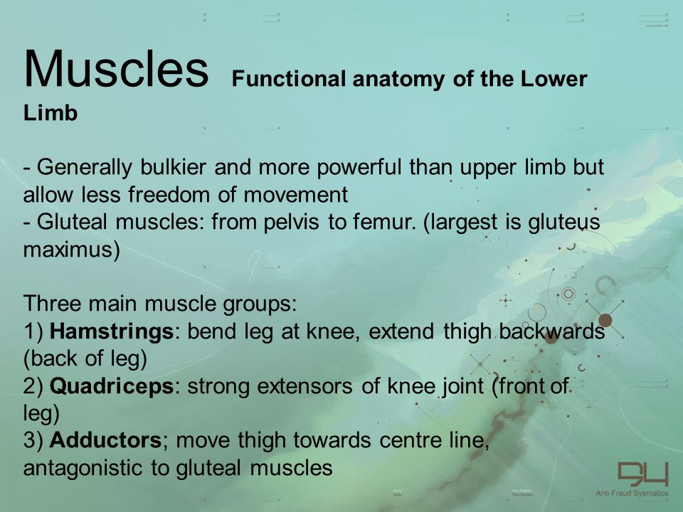 Muscl es. Muscles Functional anatomy of the Upper Limb - trapezius ...