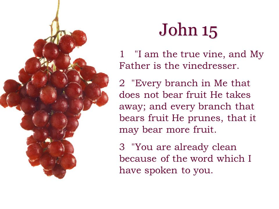 1 I am the true vine, and My Father is the vinedresser.