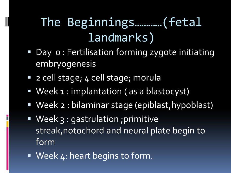 Dr  Shreetal Rajan Nair  Introduction  Human heart starts