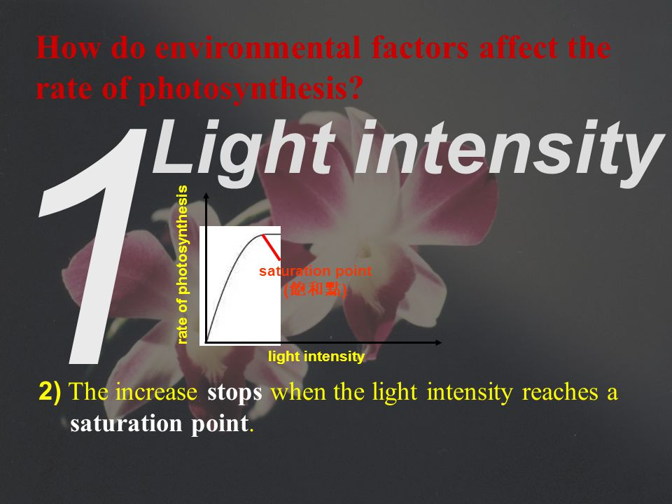 1 Light intensity 1) Initially, the rate of photosynthesis increases rapidly with increasing light intensity as more energy is supplied to the light reactions.