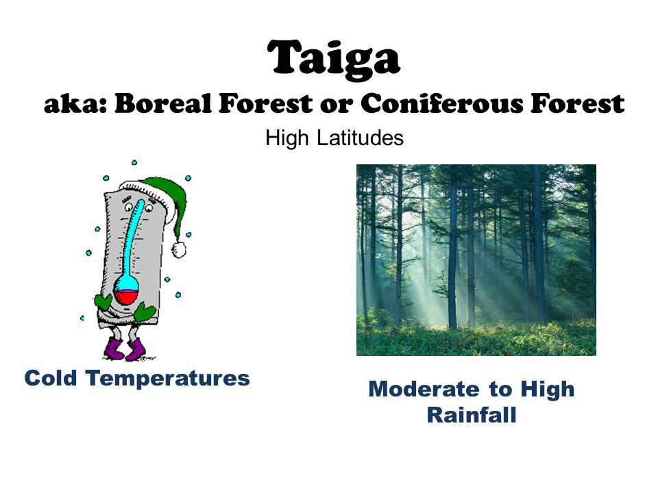 Taiga aka: Boreal Forest or Coniferous Forest Cold Temperatures Moderate to High Rainfall High Latitudes
