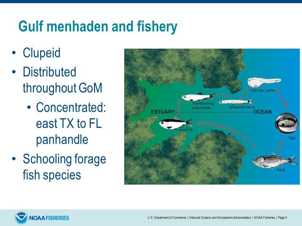 Determining relative selectivity of the gulf menhaden
