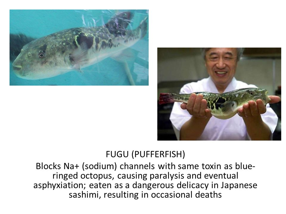FUGU (PUFFERFISH) Blocks Na+ (sodium) channels with same toxin as blue- ringed octopus, causing paralysis and eventual asphyxiation; eaten as a dangerous delicacy in Japanese sashimi, resulting in occasional deaths