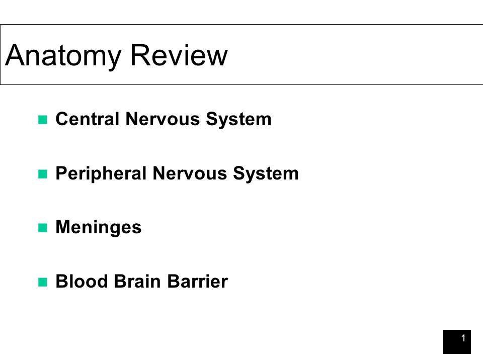 1 Anatomy Review Central Nervous System Peripheral Nervous System ...