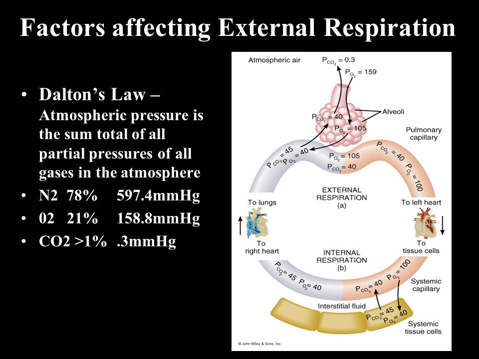 Factors affecting External Respiration Dalton's Law – Atmospheric pressure is the sum total of all partial pressures of all gases in the atmosphere N2 78%597.4mmHg 02 21%158.8mmHg CO2 >1%.3mmHg